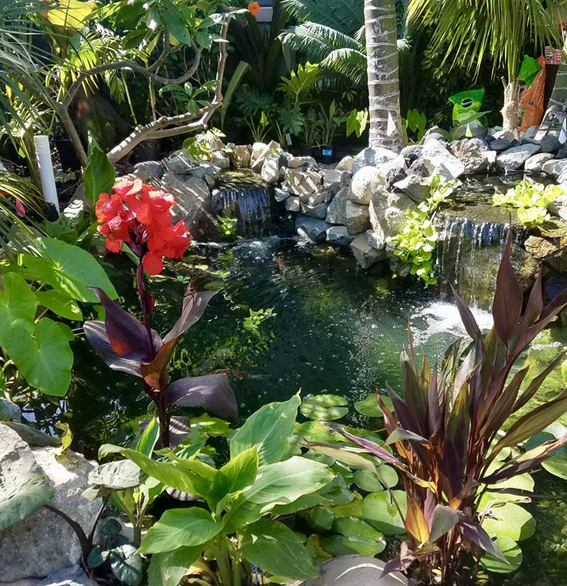 Pond maintenance services in southern california for Pond maintenance