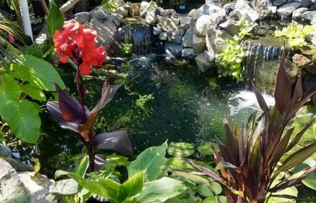 Pond-Paradise-After-Maintenance