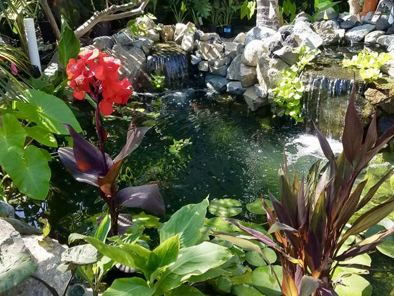 Waterfall splashing into beautiful clear pond with tropical aquatic plants around it