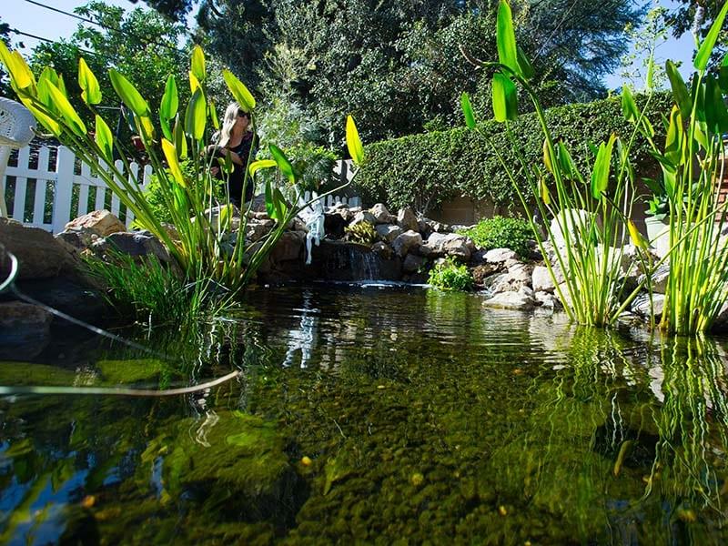 Southern California Koi Pond