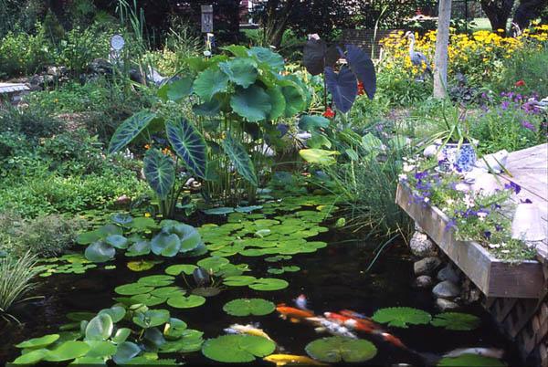 Orange County pond plants